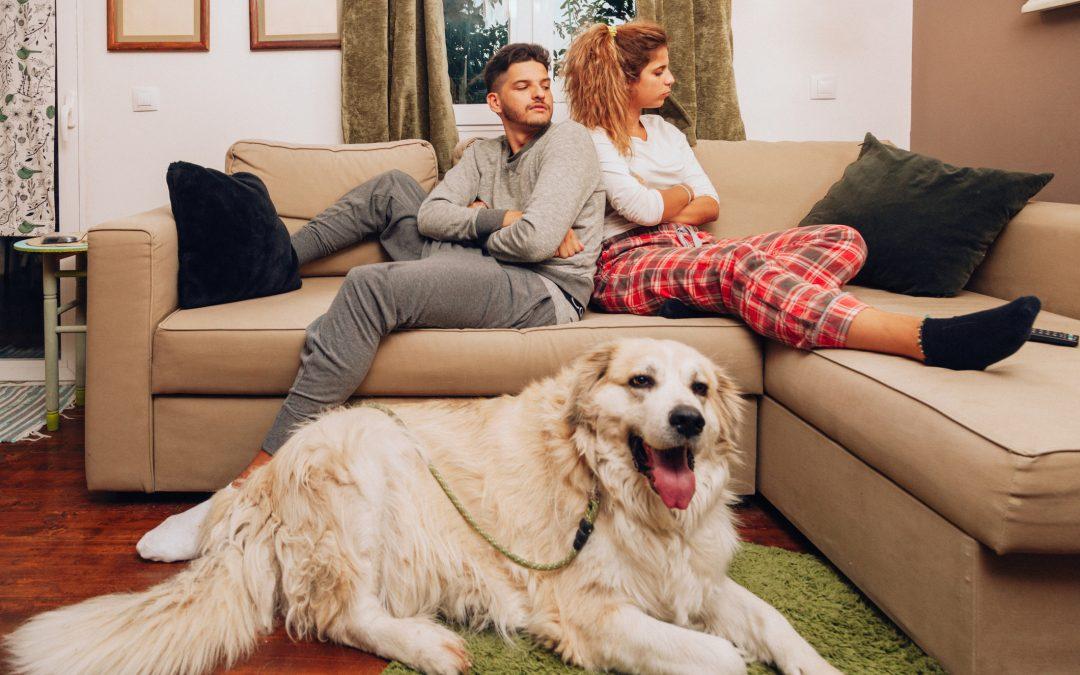 Divórcio: Juiz condena ex-marido a pagar R$ 200 mensais para gastos de cães